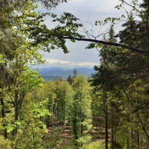 """An den """"Waldtagen"""" mit den Staatsforsten unterwegs"""