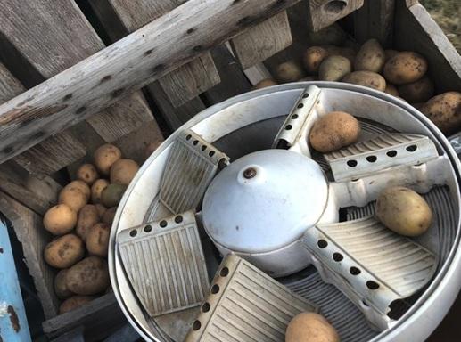 Kartoffeln selber ernten